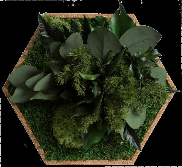 Kork-Hexagon begrünt Dschungel, 6er Pack