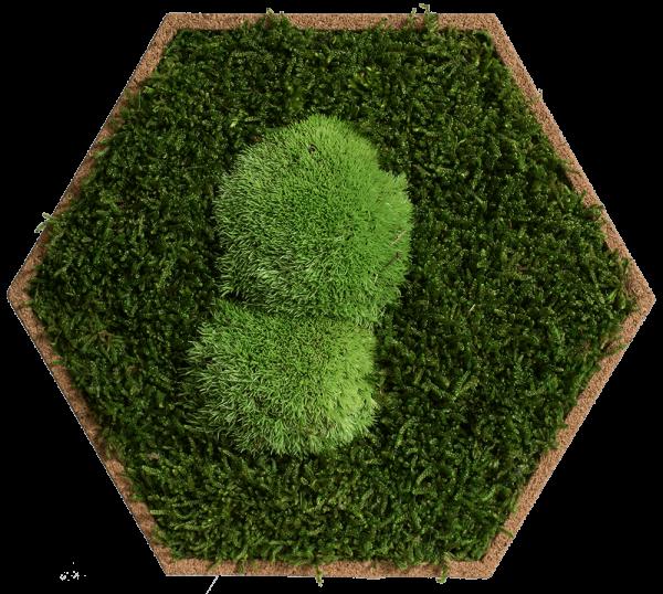 Kork-Hexagon begrünt Wald- und Kugelmoos, 9er Pack