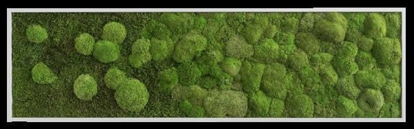 Moosbild Verlauf: Wald- und Kugelmoosbild Verlauf 140x40cm Alu (schwarz) ohne Schrauben-Set
