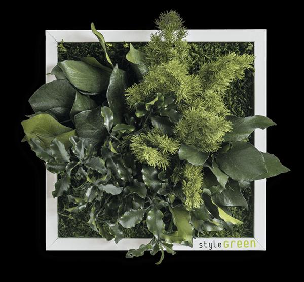 Pflanzeninselbild 22x22