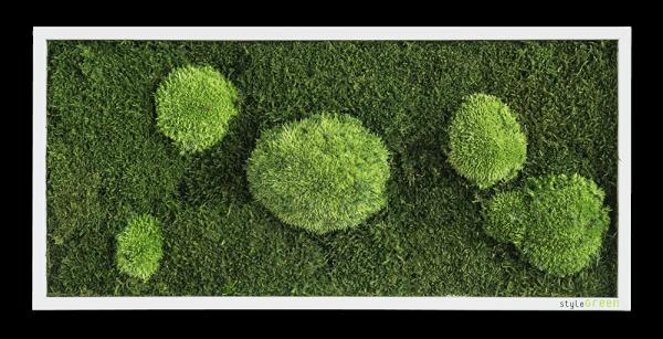 Wald- und Kugelmoosbild 57x27