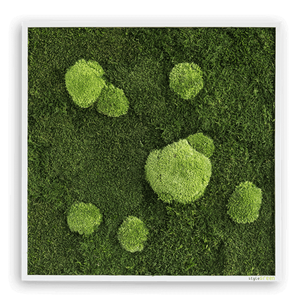 Wald- und Kugelmoosbild 55x55