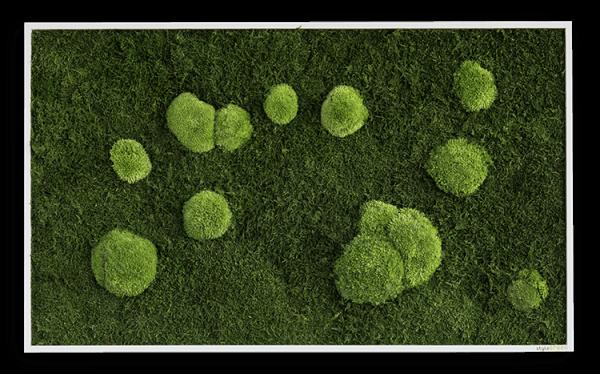 Wald- und Kugelmoosbild 100x60