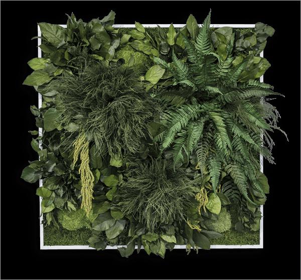 Pflanzenbild: Dschungel 80x80cm Alu (schwarz) ohne Schrauben-Set