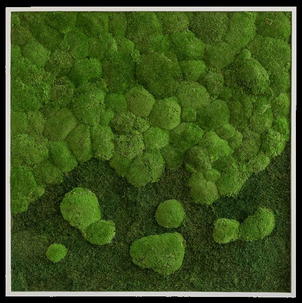 Wald- und Kugelmoosbild Verlauf 80x80 frontal
